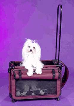 df4de99e8c Pet Carrier - Tutto Pet On Wheels Airline Approved Pet Carrier - Small  Purple